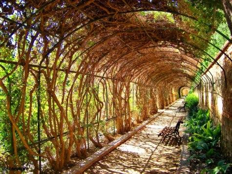 jardi-de-monfort-7